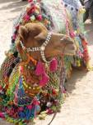 Camel parking, Jodhpur.