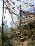 Tibetan peace flags, Dharamsala.