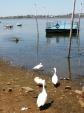 At the Upper Lake Boat Club, Bhopal.