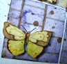 indian butterfly4