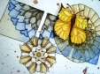 yellowbutterfly trio2